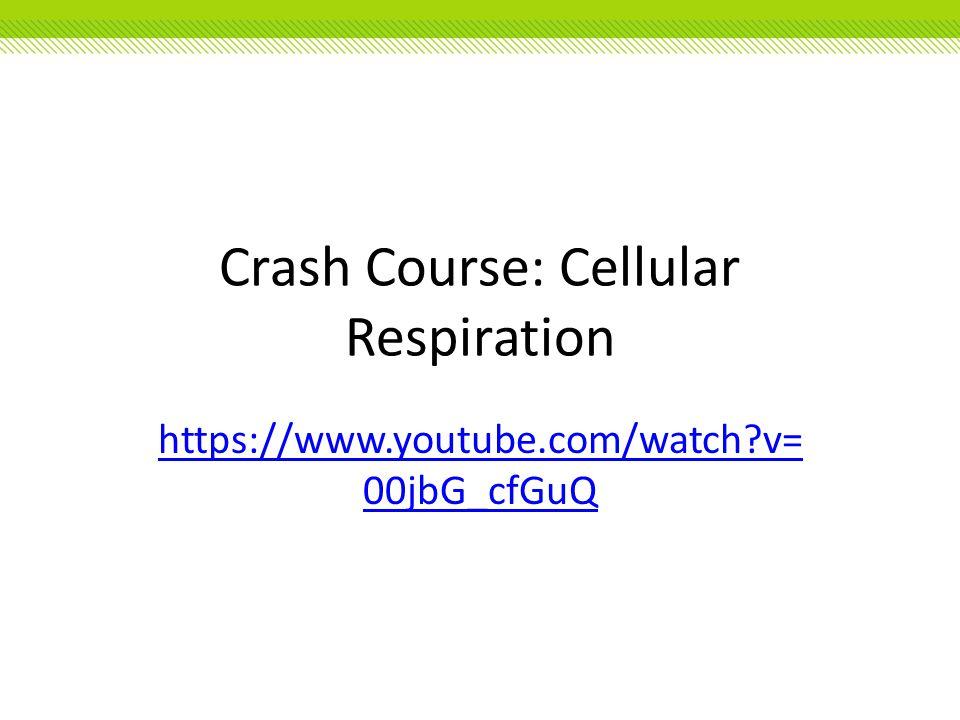 Crash Course: Cellular Respiration