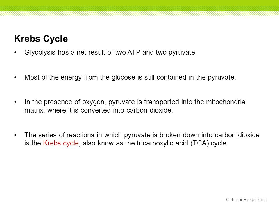 Krebs Cycle Glycolysis has a net result of two ATP and two pyruvate.