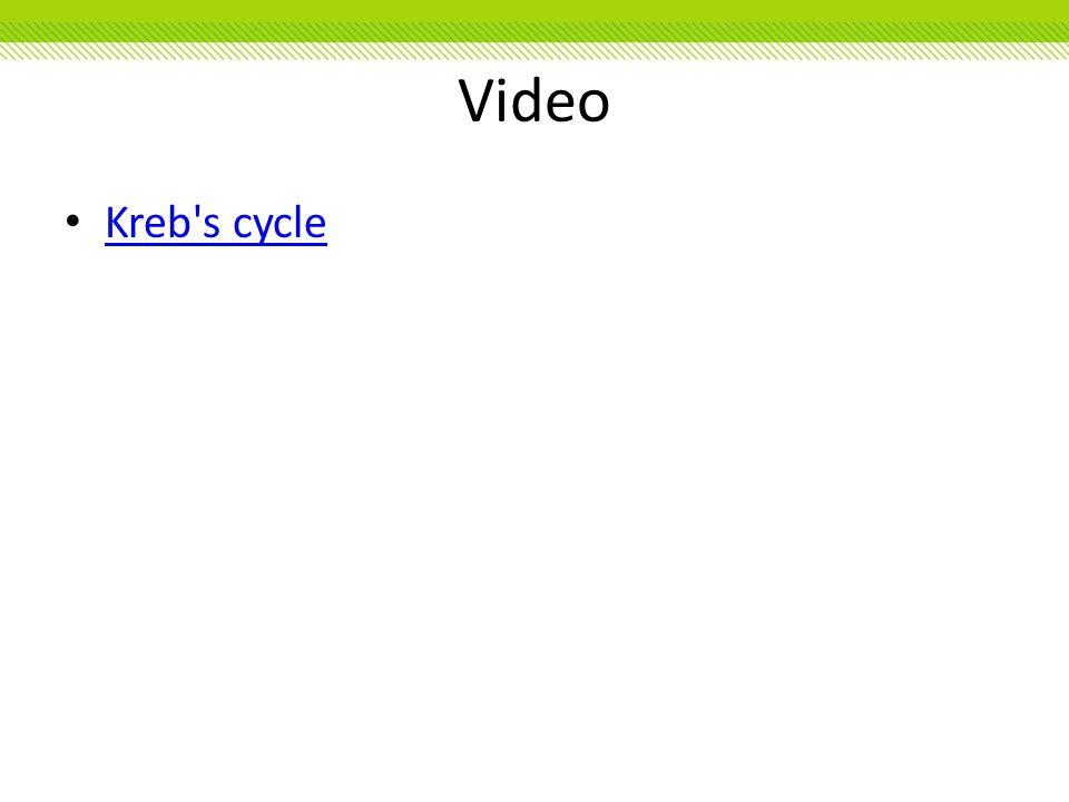 Video Kreb s cycle