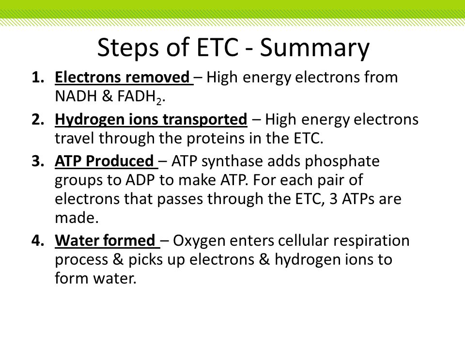 Steps of ETC - Summary Electrons removed – High energy electrons from NADH & FADH2.