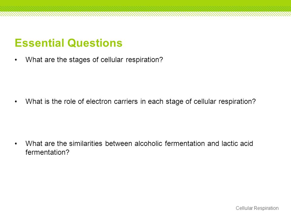 Essential Questions What are the stages of cellular respiration