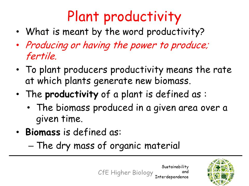 Plant productivity What is meant by the word productivity