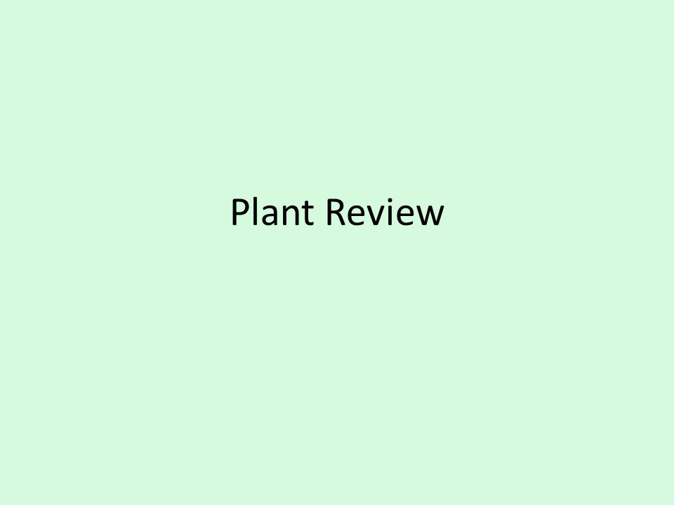 Plant Review