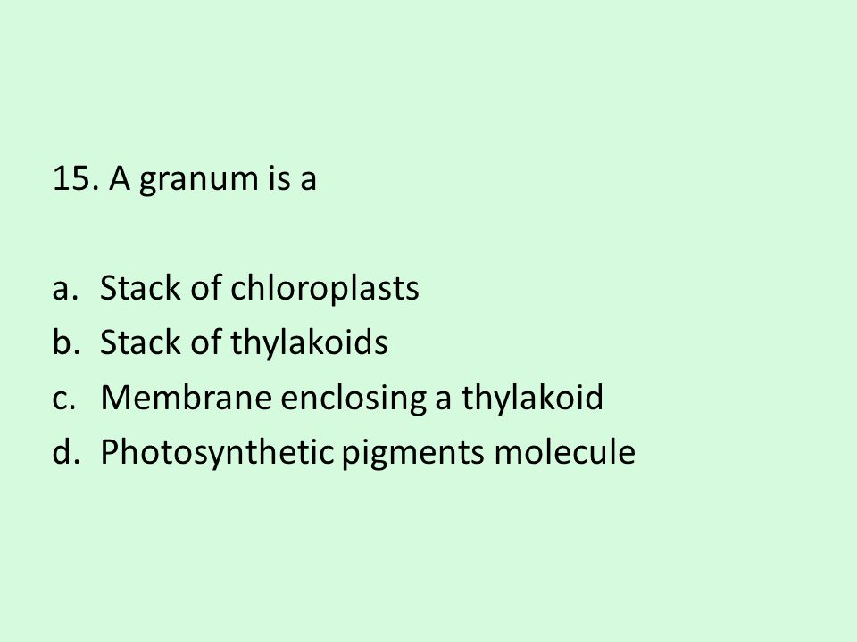 15. A granum is a Stack of chloroplasts. Stack of thylakoids.