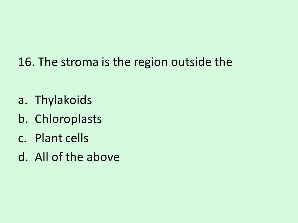 16. The stroma is the region outside the