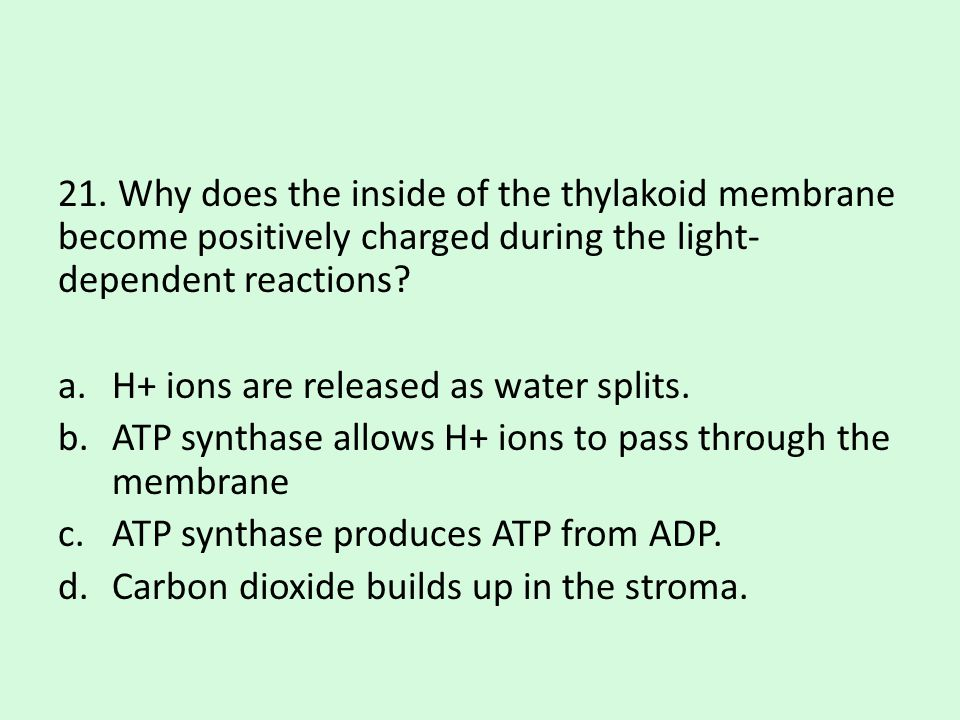 21. Why does the inside of the thylakoid membrane become positively charged during the light-dependent reactions