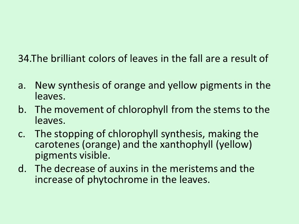 34.The brilliant colors of leaves in the fall are a result of