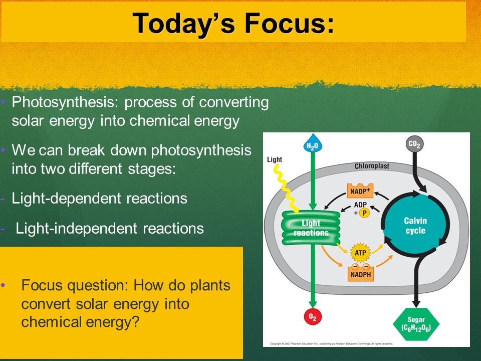 Today's Focus: Photosynthesis: process of converting solar energy into chemical energy.