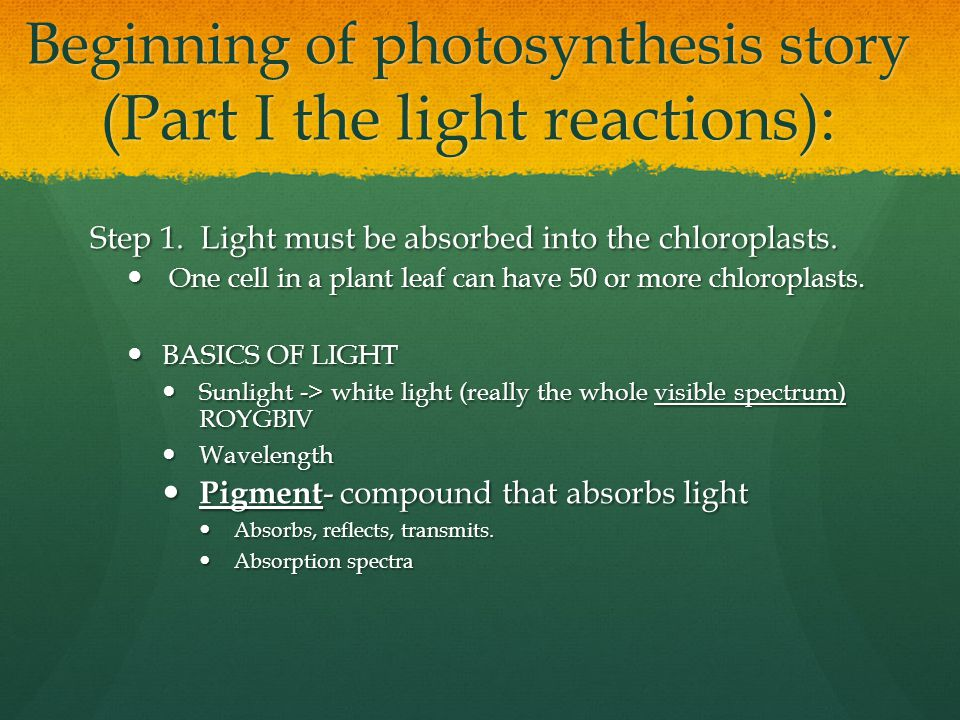 Beginning of photosynthesis story (Part I the light reactions):