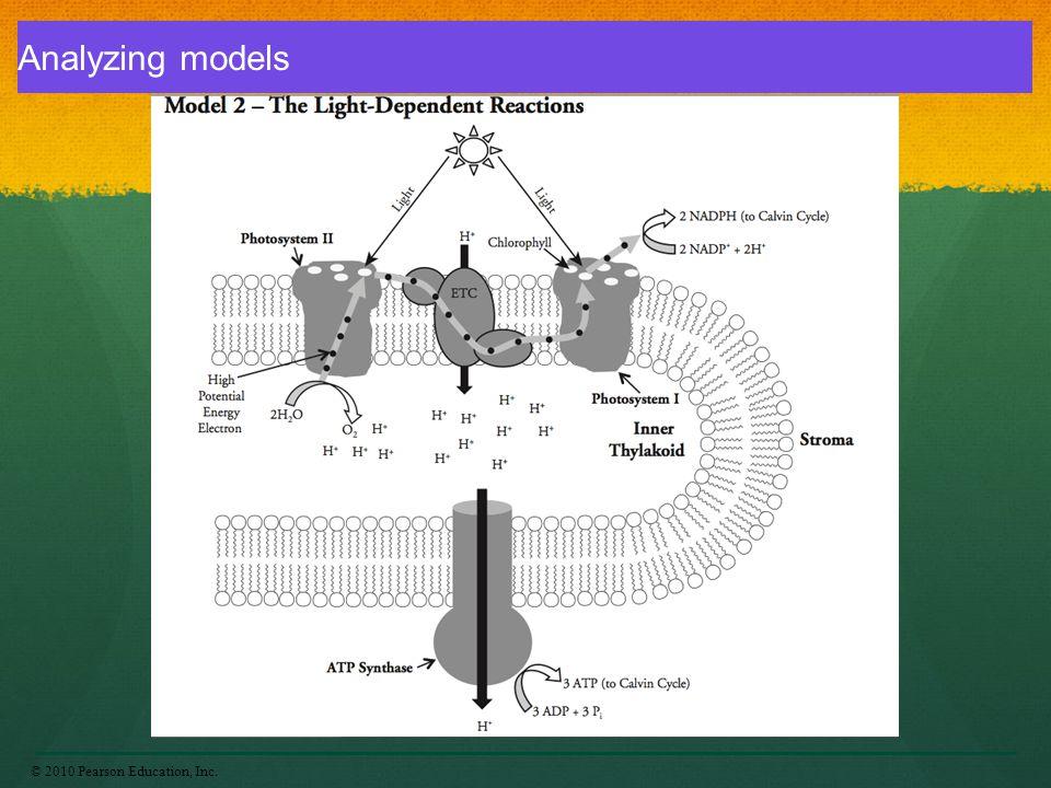 Analyzing models © 2010 Pearson Education, Inc.