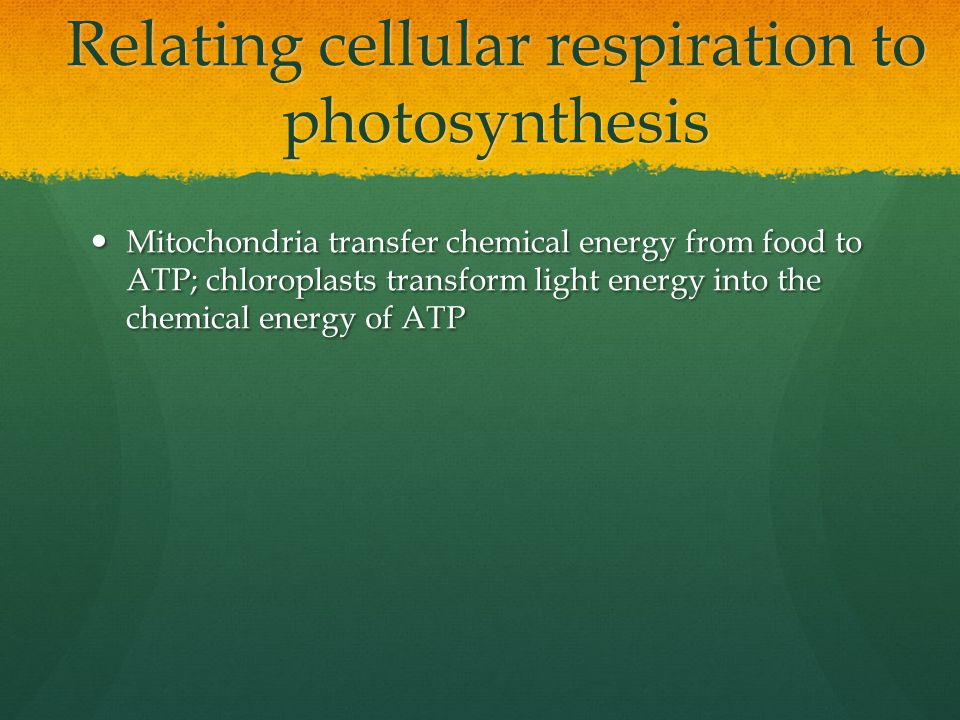 Relating cellular respiration to photosynthesis