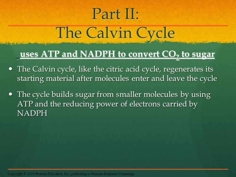 Part II: The Calvin Cycle uses ATP and NADPH to convert CO2 to sugar