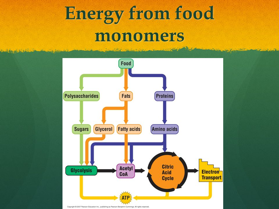Energy from food monomers