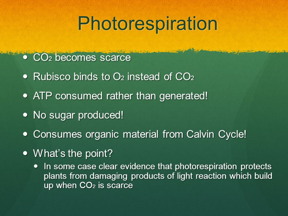 Photorespiration CO2 becomes scarce Rubisco binds to O2 instead of CO2