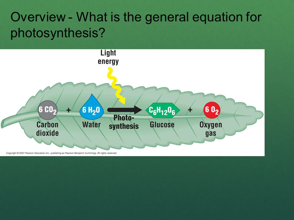 Overview - What is the general equation for photosynthesis