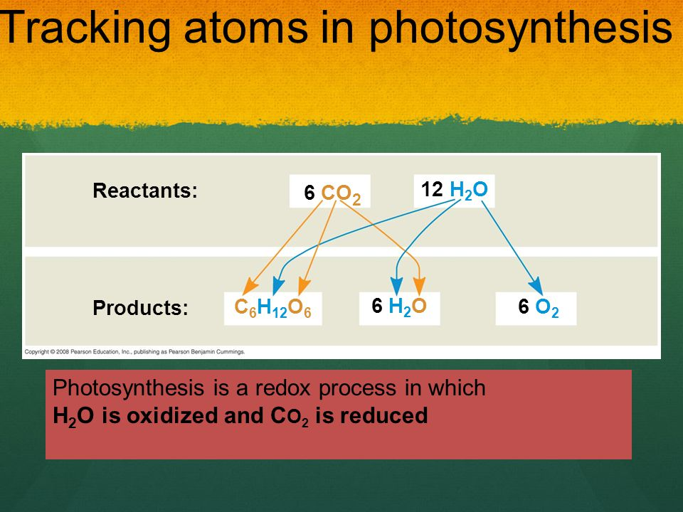 Tracking atoms in photosynthesis