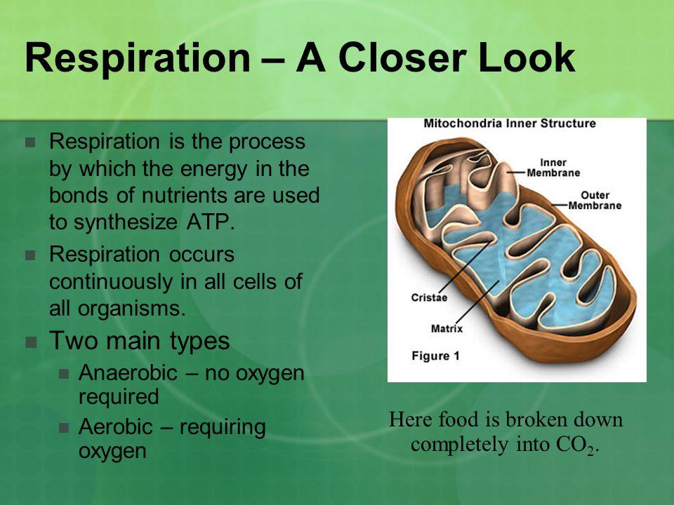 Respiration – A Closer Look