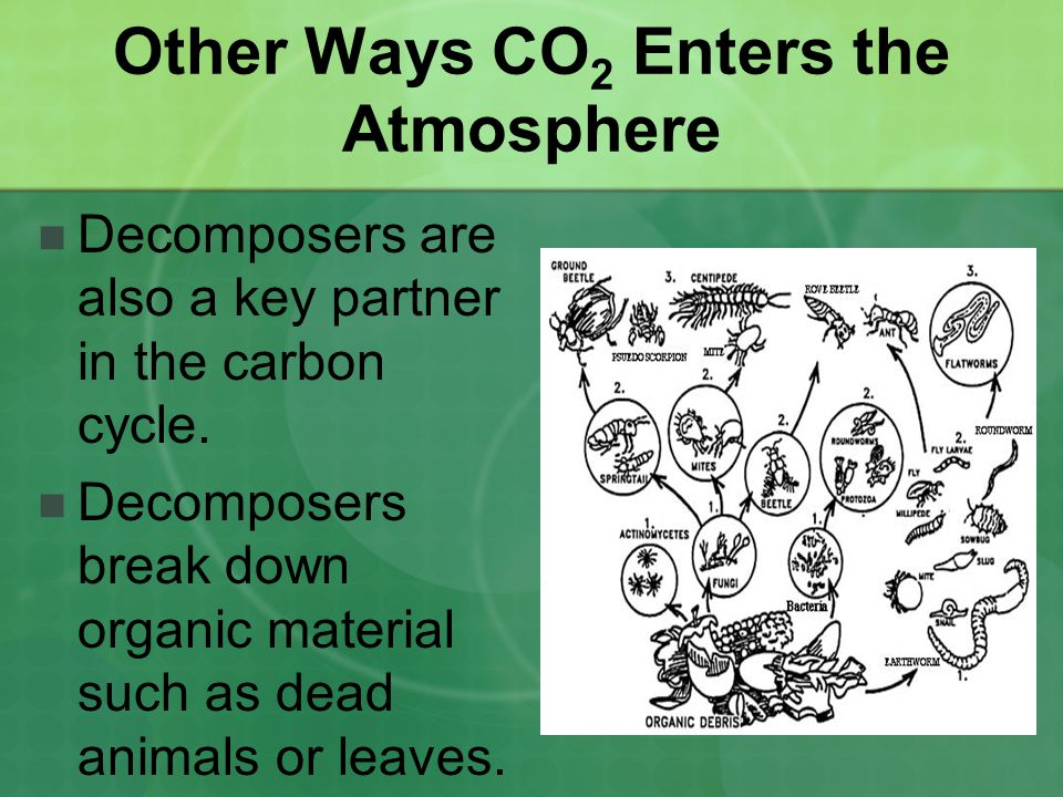 Other Ways CO2 Enters the Atmosphere