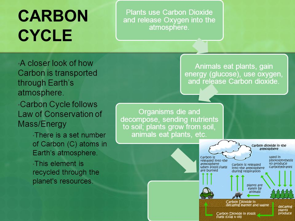Plants use Carbon Dioxide and release Oxygen into the atmosphere.