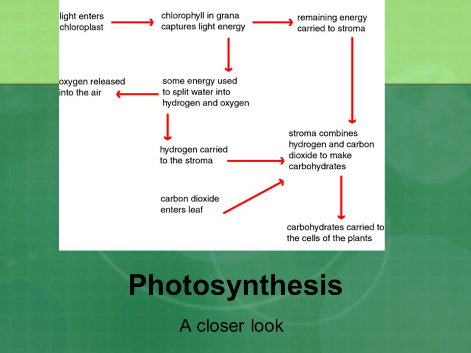 Photosynthesis A closer look