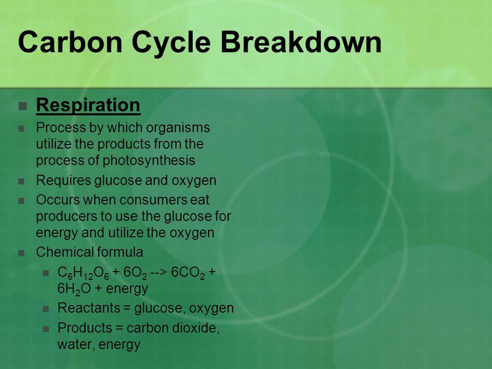 Carbon Cycle Breakdown
