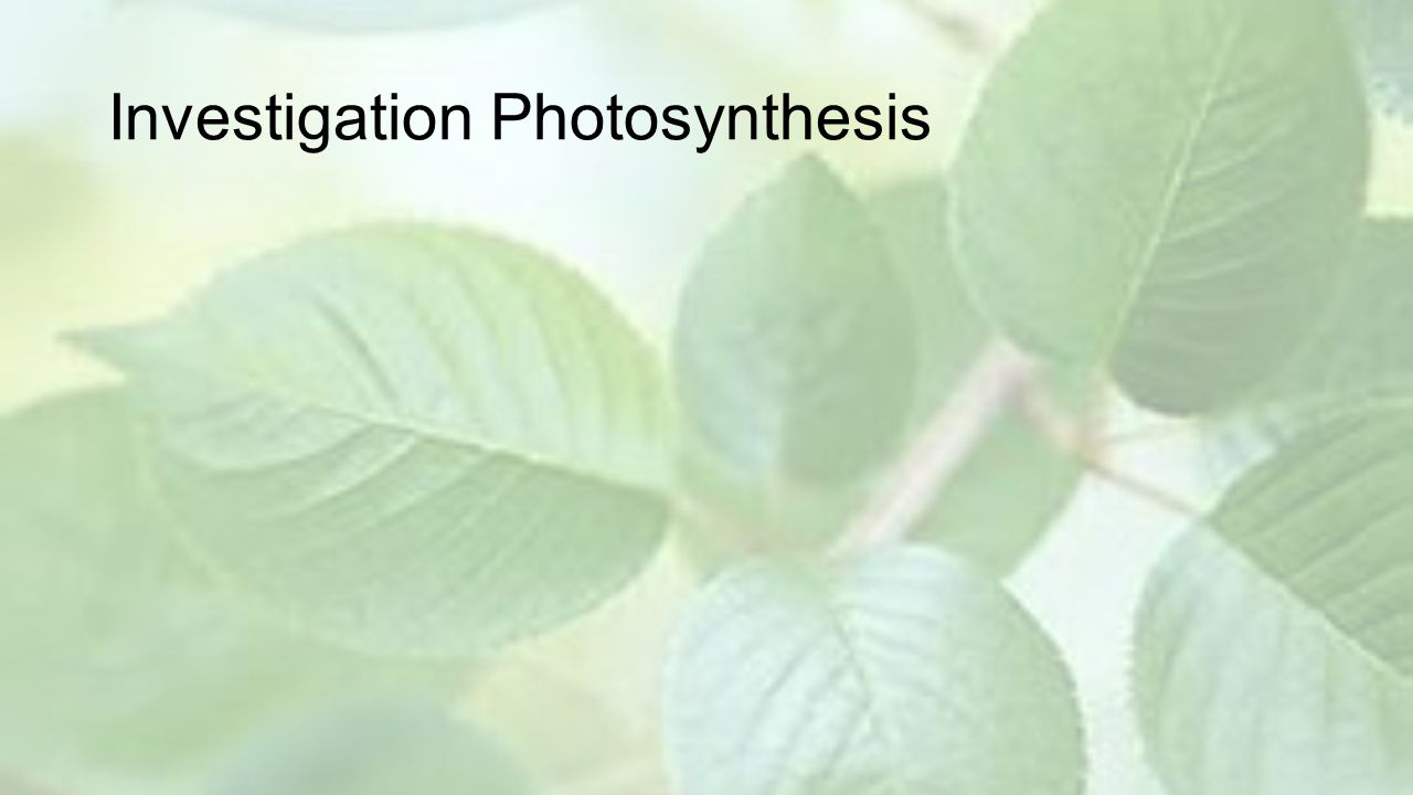 Investigation Photosynthesis