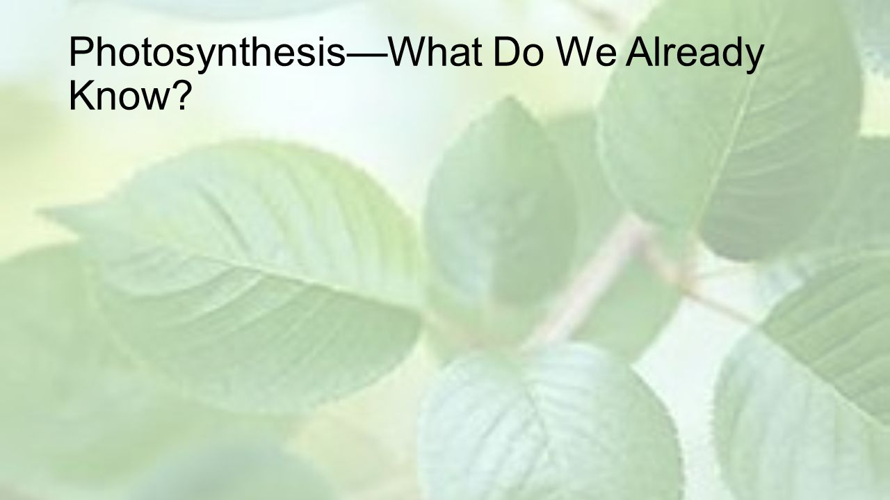 Photosynthesis—What Do We Already Know