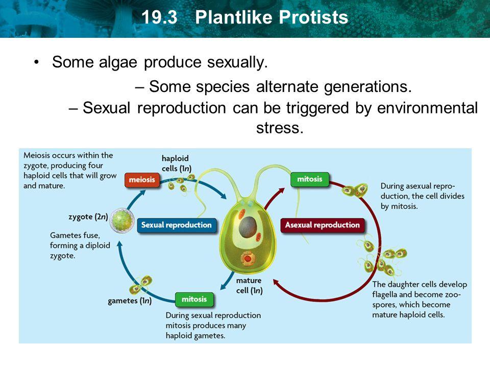 Some algae produce sexually.