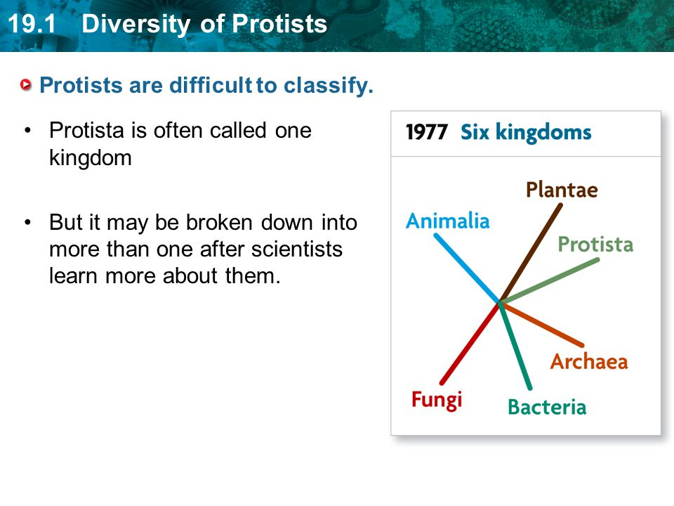 Protists are difficult to classify.