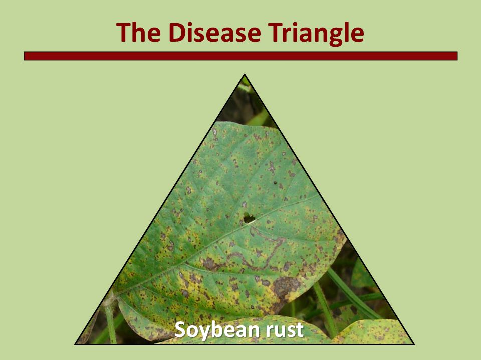 The Disease Triangle Soybean rust