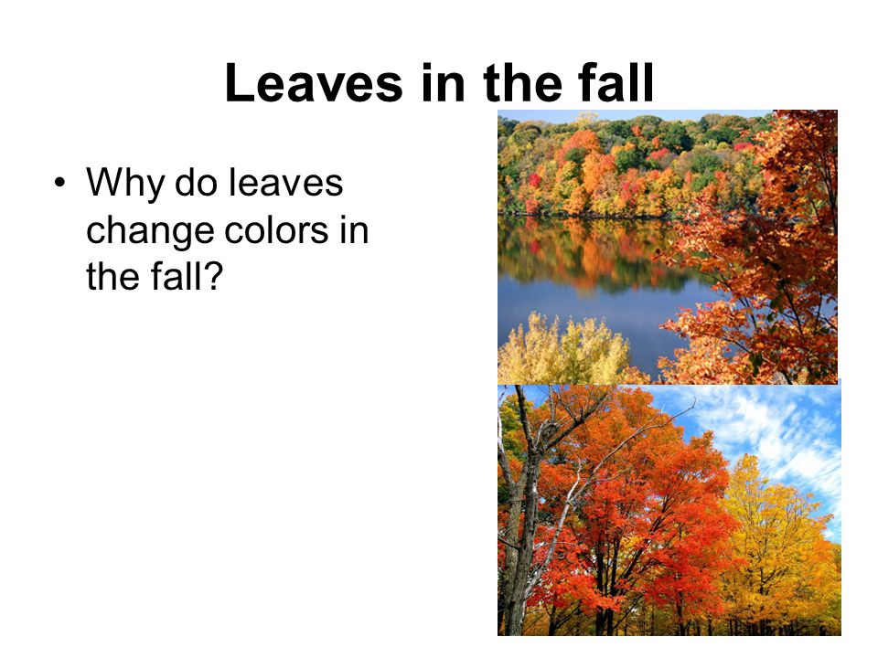 Leaves in the fall Why do leaves change colors in the fall