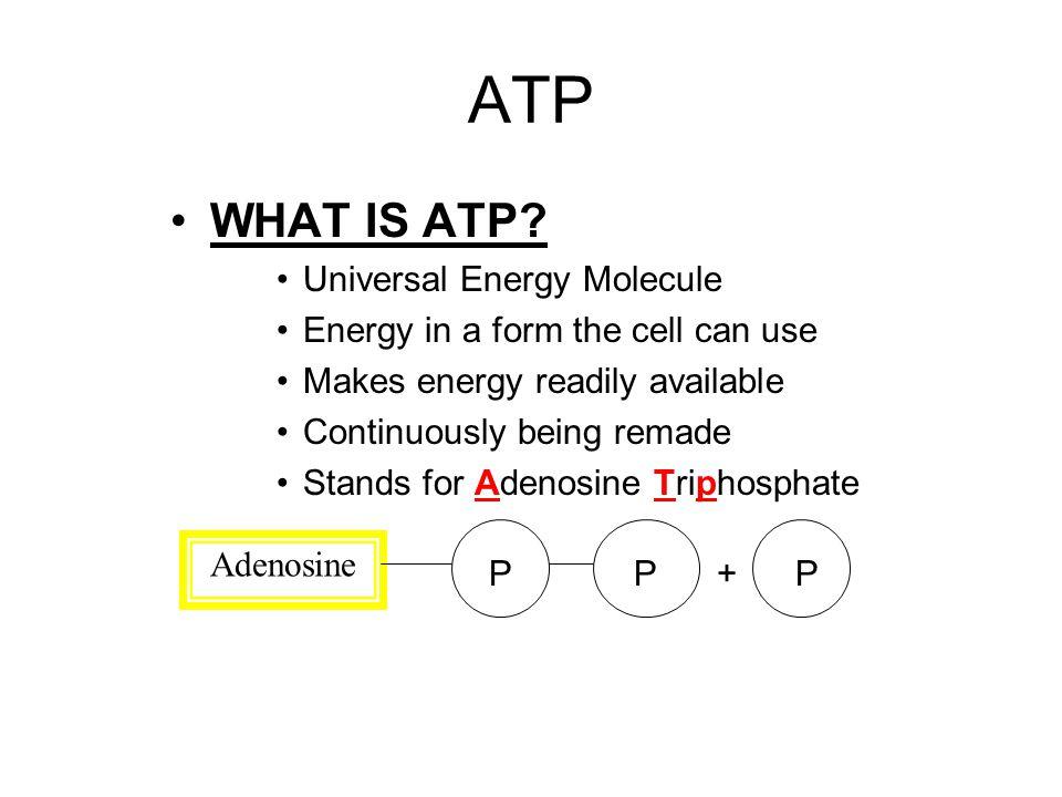 ATP WHAT IS ATP Universal Energy Molecule