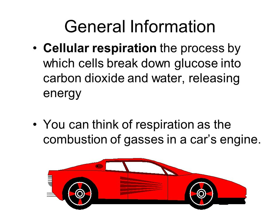 General Information Cellular respiration the process by which cells break down glucose into carbon dioxide and water, releasing energy.