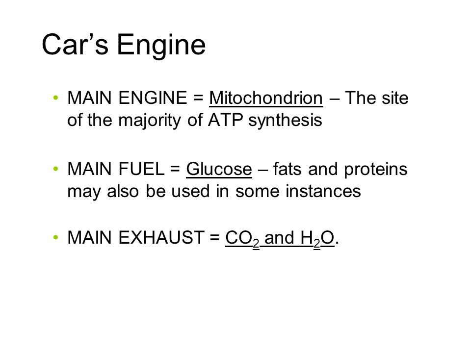 Car's Engine MAIN ENGINE = Mitochondrion – The site of the majority of ATP synthesis.