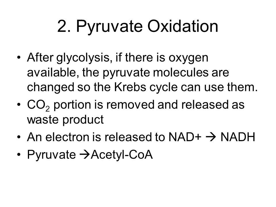 2. Pyruvate Oxidation After glycolysis, if there is oxygen available, the pyruvate molecules are changed so the Krebs cycle can use them.