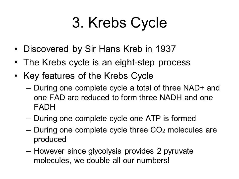 3. Krebs Cycle Discovered by Sir Hans Kreb in 1937