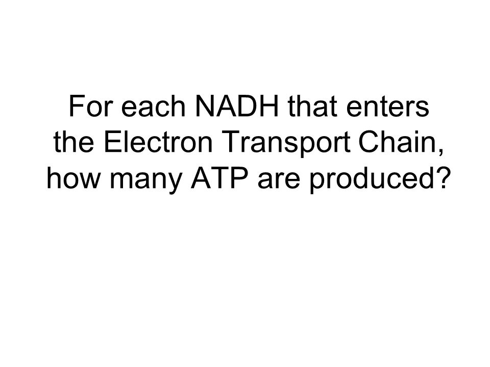 For each NADH that enters the Electron Transport Chain, how many ATP are produced