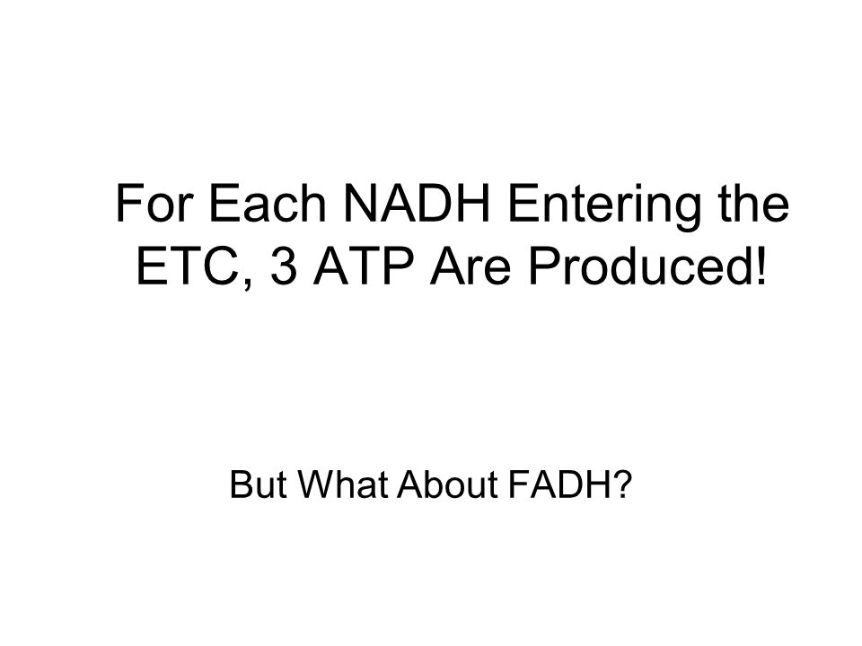 For Each NADH Entering the ETC, 3 ATP Are Produced!