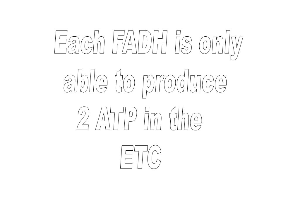 Each FADH is only able to produce 2 ATP in the ETC