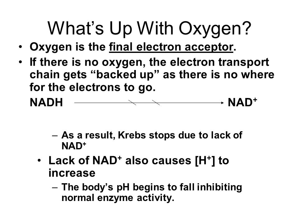 What's Up With Oxygen Oxygen is the final electron acceptor.