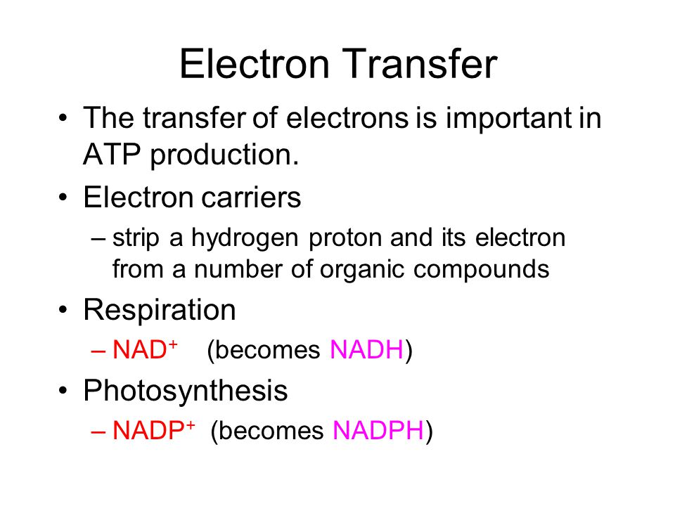 Electron Transfer The transfer of electrons is important in ATP production. Electron carriers.