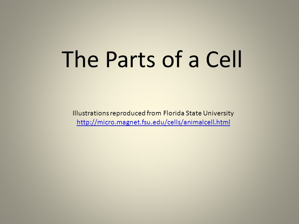 Illustrations reproduced from Florida State University