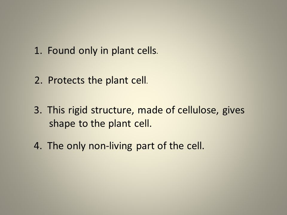 1. Found only in plant cells.