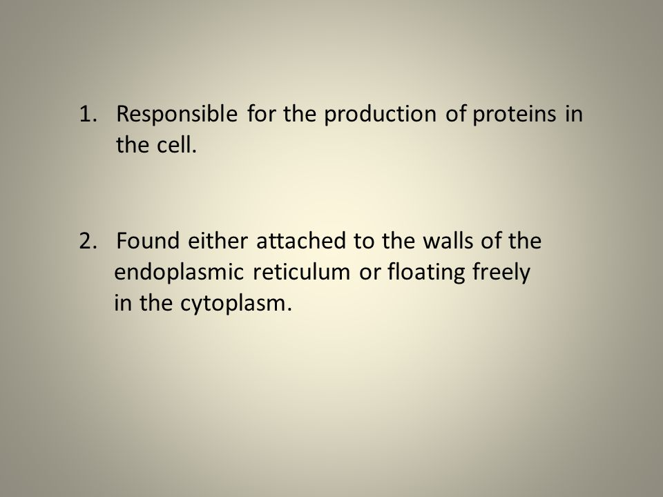 Responsible for the production of proteins in the cell.