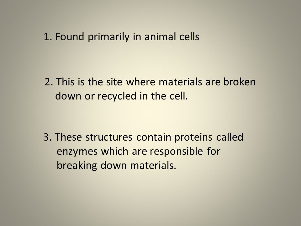 1. Found primarily in animal cells