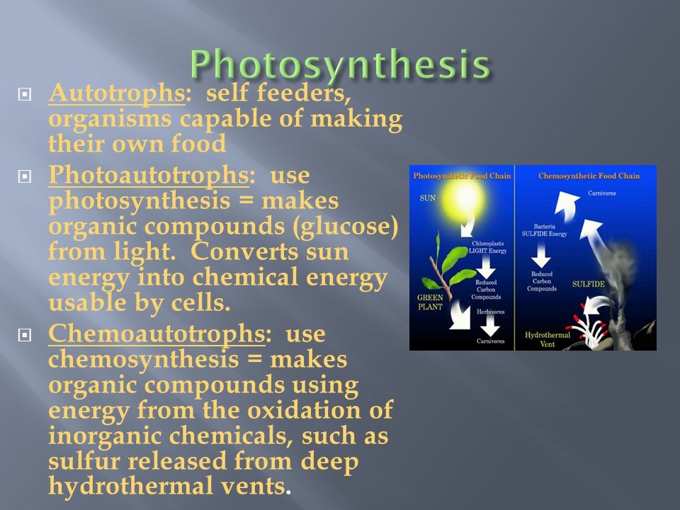 Photosynthesis Autotrophs: self feeders, organisms capable of making their own food.