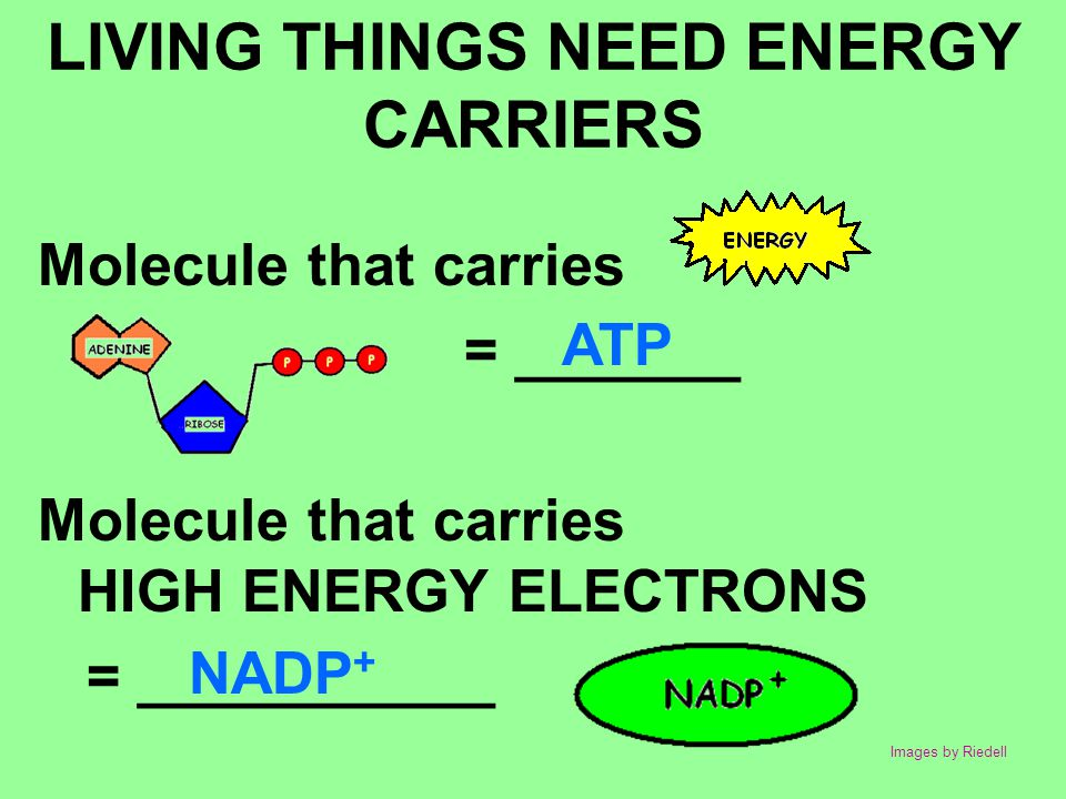 LIVING THINGS NEED ENERGY CARRIERS