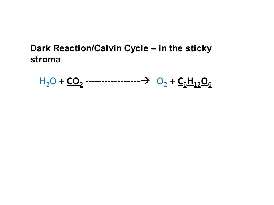 H2O + CO2 ----------------- O2 + C6H12O6