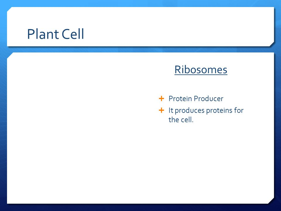 Plant Cell Ribosomes Protein Producer
