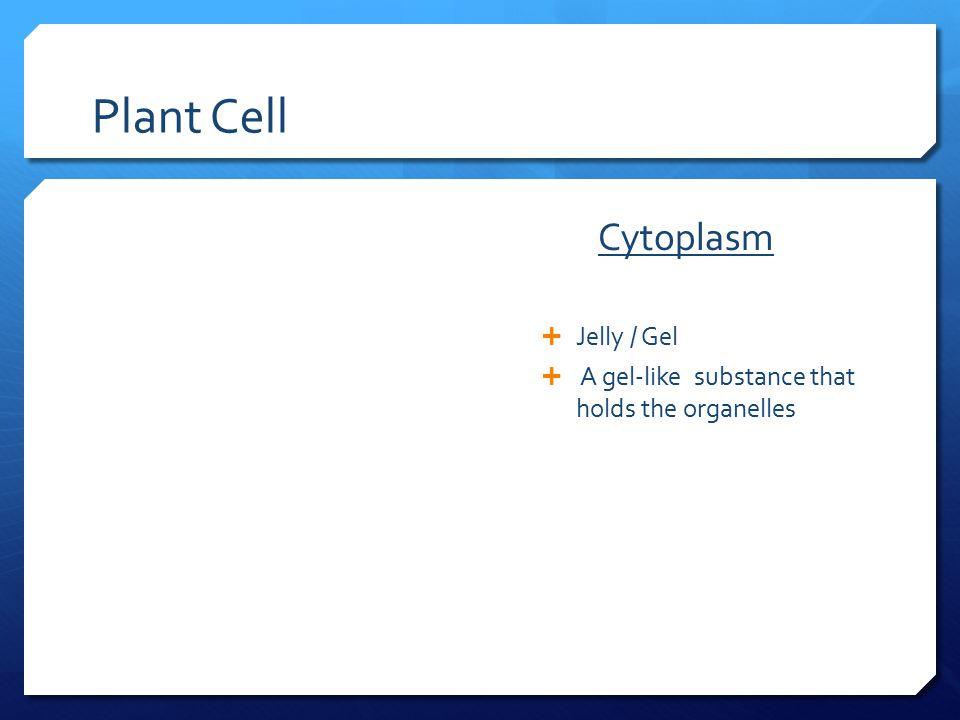 Plant Cell Cytoplasm Jelly / Gel
